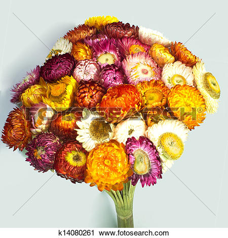 Straw flowers clipart #17