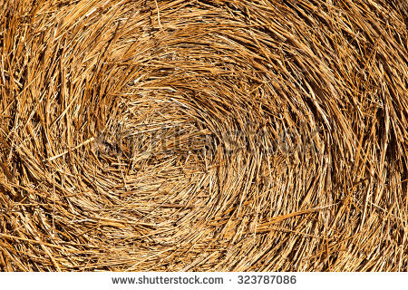 Roll Straw Harvest Stock Photos, Images, & Pictures.