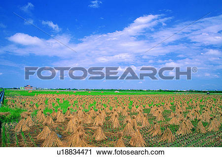 Stock Photography of Nature, Natural landscape, Straw, Cloud, Rice.
