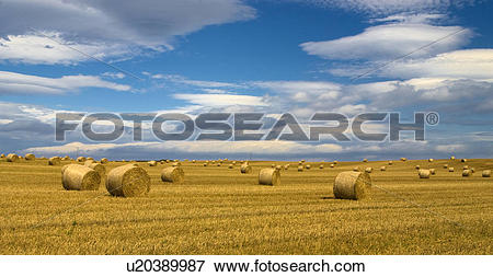 Picture of England, North Yorkshire, Burniston, A view of straw.