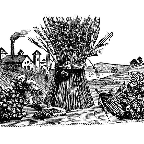 fall clip art, sheaf of wheat, fruit vegetable harvest, vintage.