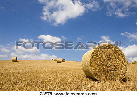 Pictures of Hay being harvested into straw bales in farm field.