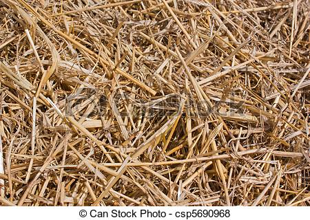 Pictures of Loose Straw, Laying in Harvest Field..