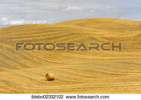 "Stock Photo of ""A bale of straw, harvested wheat fields, landscape."