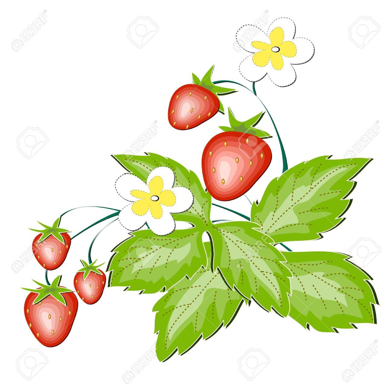 Wild Strawberry Clipart.