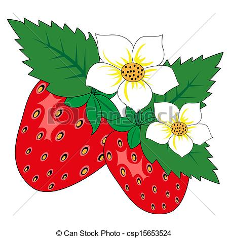 Vector Illustration of Strawberry with leaves and flowers on a.