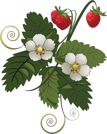 Strawberry Plant Outline Clipart.