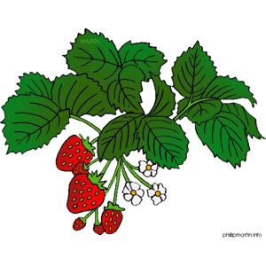 Strawberry plant clipart 20 free Cliparts | Download ...