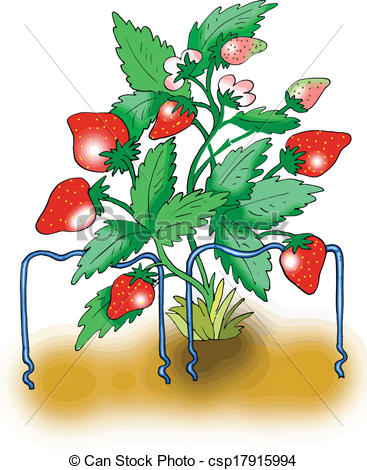 Strawberry plant Vector Clip Art Illustrations. 2,991 Strawberry.