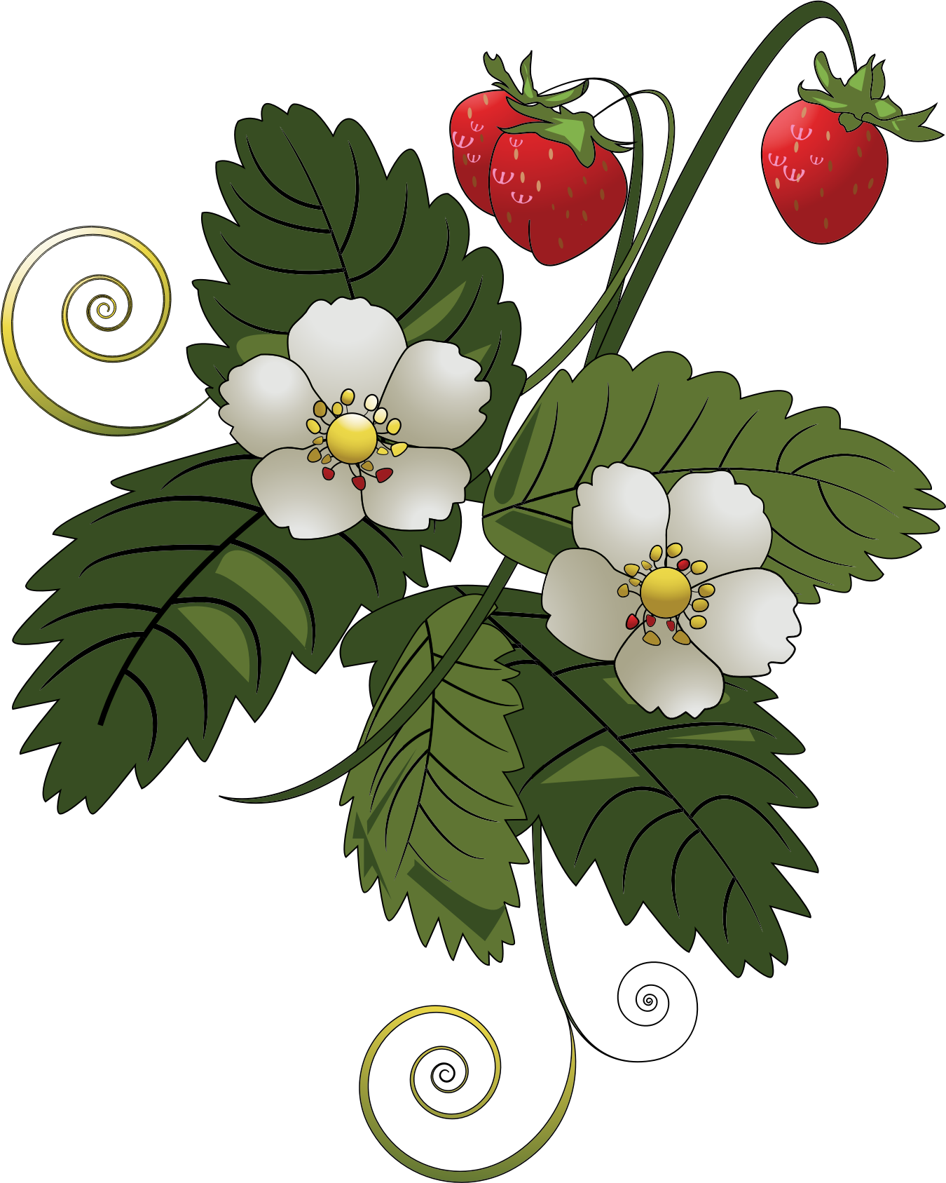 Strawberry plants clipart - Clipground