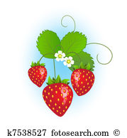 Strawberry plant Illustrations and Stock Art. 466 strawberry plant.