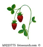 Strawberry plant Illustrations and Stock Art. 457 strawberry plant.