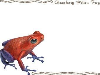 Strawberry Poison Frog, Strawberry Poison.