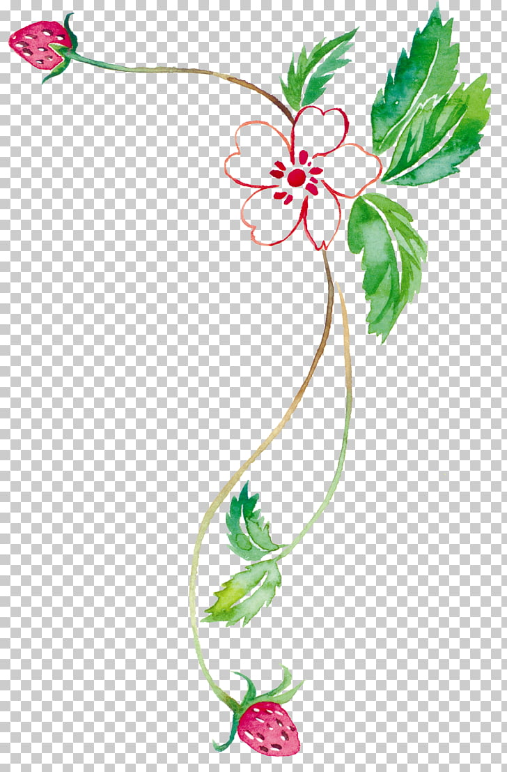 Watercolor painting Tabloid , Strawberry vine PNG clipart.
