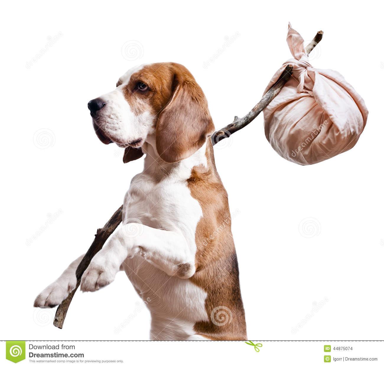 Stray dog clipart.