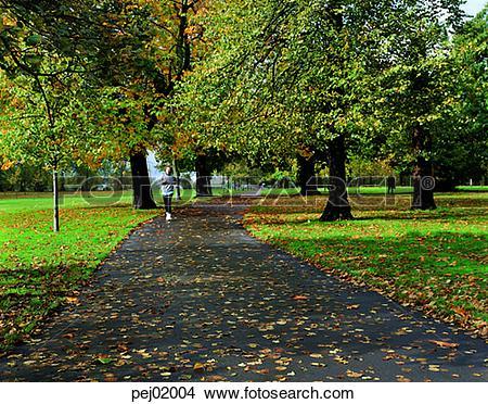 Stock Photo of street tree, avenue, autumn, fall, autumn scenery.