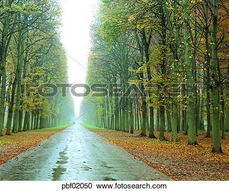 Stock Photography of street tree, avenue, autumn, fall, autumn.