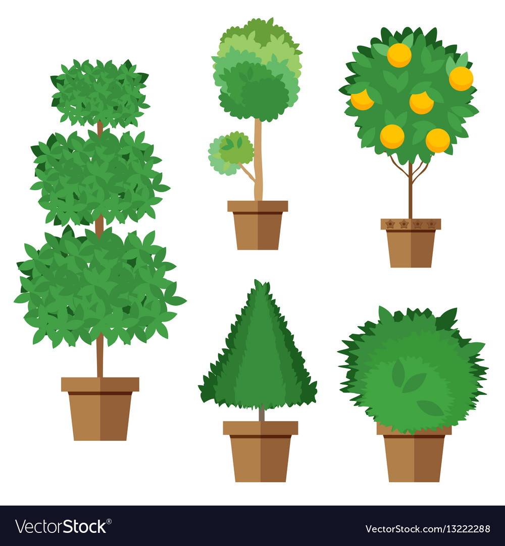Set of street trees and shrubs in pots.