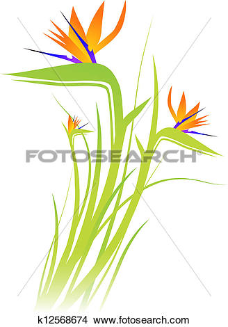 Clipart of Bird of Paradise Flower (Strelitzia) k12568674.