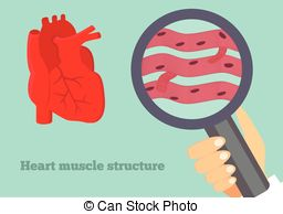 Cardiac striated muscle tissue Vector Clipart EPS Images. 3.