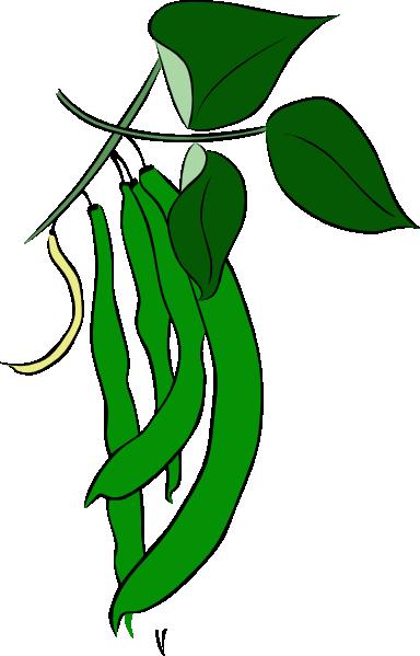 76+ Green Bean Clip Art.