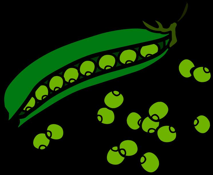 55+ Beans Clip Art.