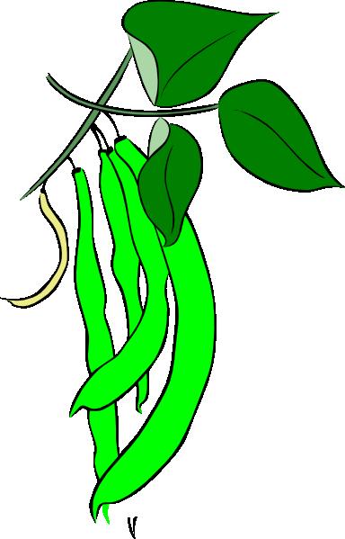 Green French Bean Clip Art at Clker.com.