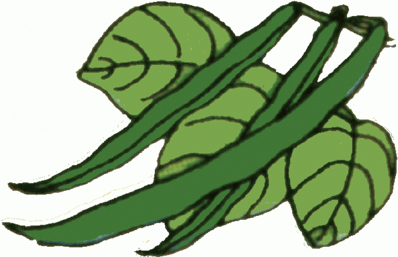 Clip art green beans string beans happy clipart clipart kid.