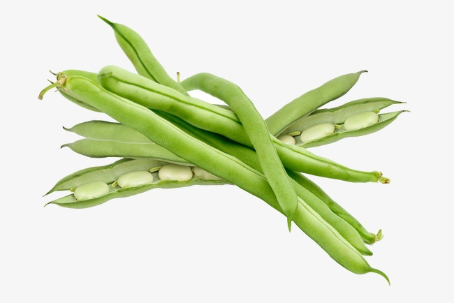 String beans clipart 8 » Clipart Station.