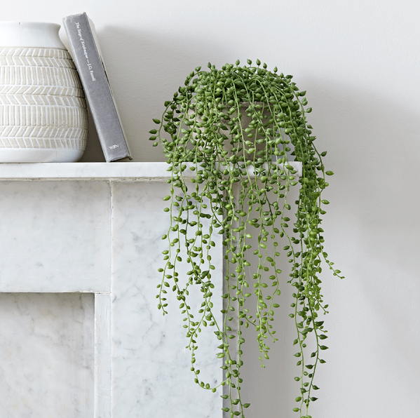 String Of Pearls Artificial Plant in Cement Pot.