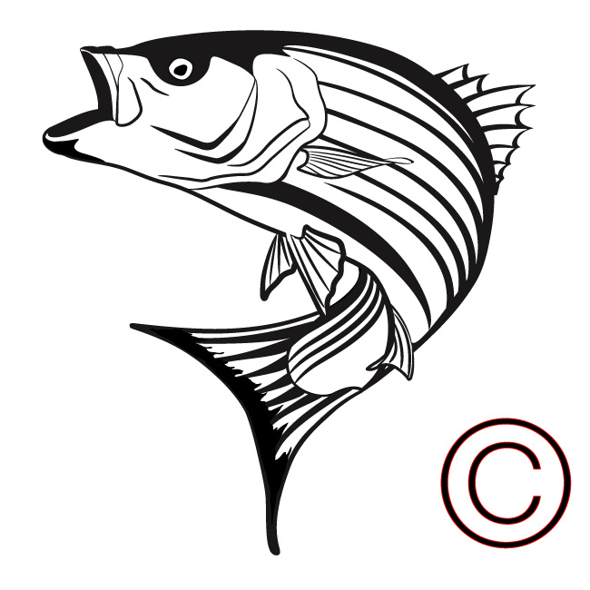 Striped Bass Clipart.