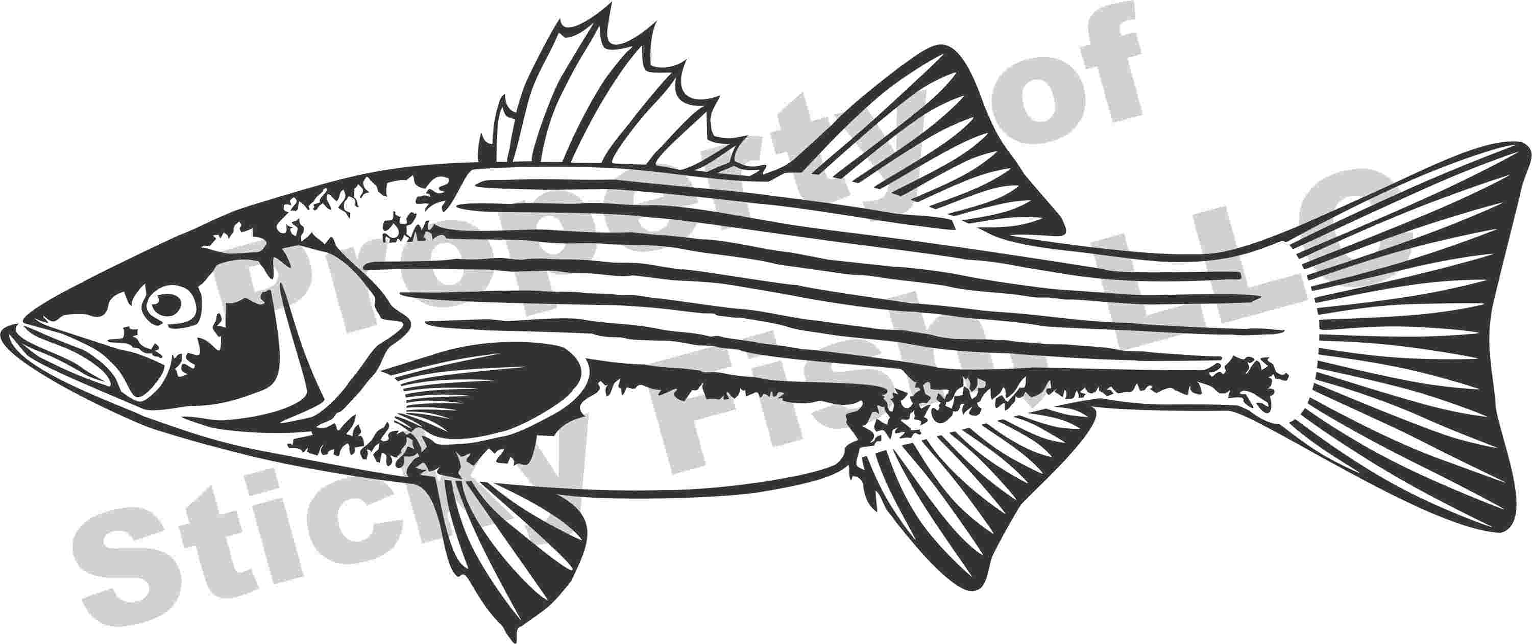 Striped drum fish need good