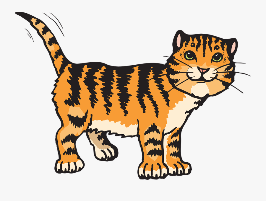 Cat, Stripes, Tiger, Animal, Tail, Whiskers, Striped.