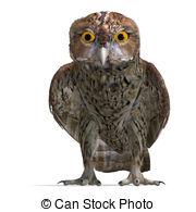 Strix Clip Art and Stock Illustrations. 18 Strix EPS illustrations.