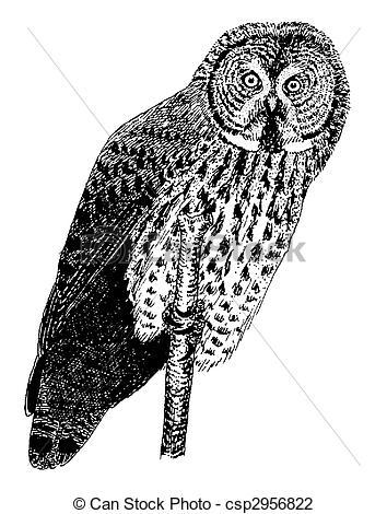 Clip Art of Great Gray Owl.