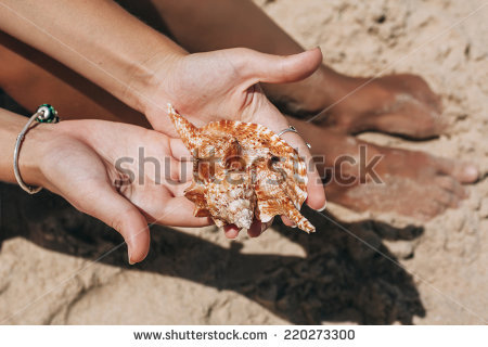 Strombidae Stock Images, Royalty.