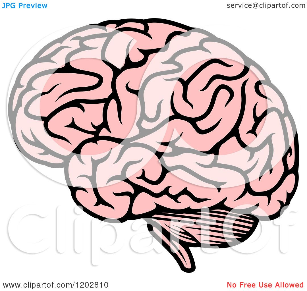 Clipart of a Pink Human Brain 2.