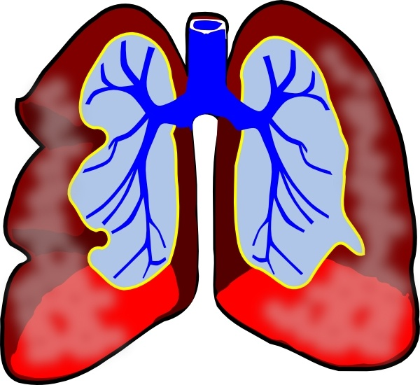 Lungs free vector download (38 Free vector) for commercial use.