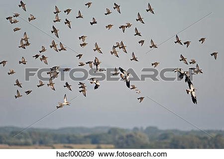Stock Photograph of Germany, Schleswig.