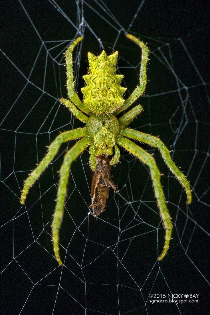 17 Best ideas about Spider on Pinterest.