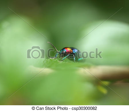 Pictures of A Beetle perched on a plant leaf. Superfamily.