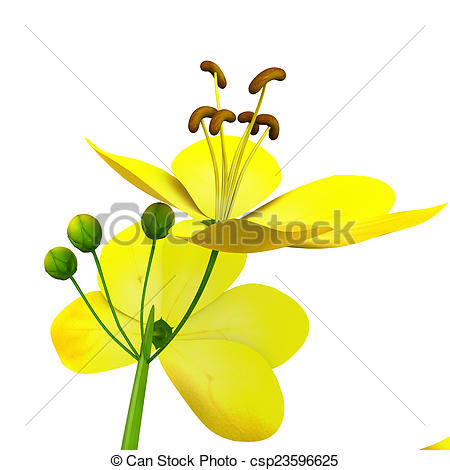 Clip Art of Cassia (genus).