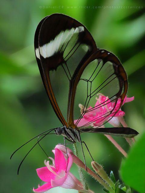 1000+ ideas about Photos Of Butterflies on Pinterest.