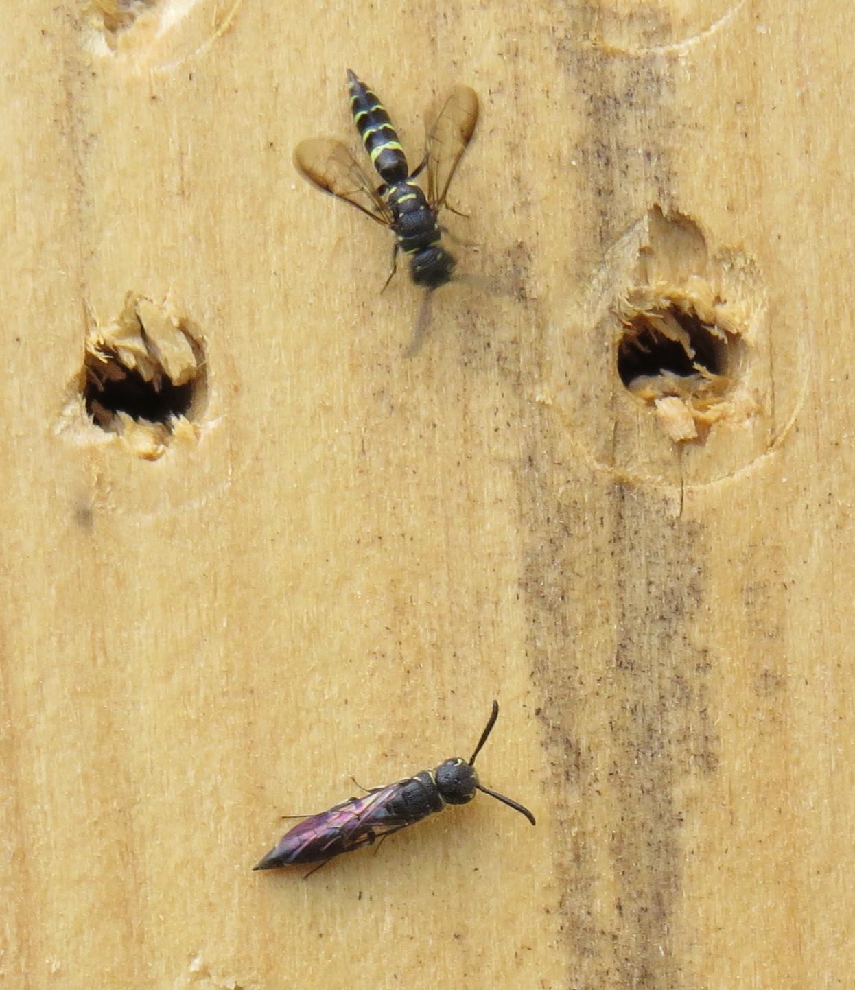 Bug Eric: June 2016.