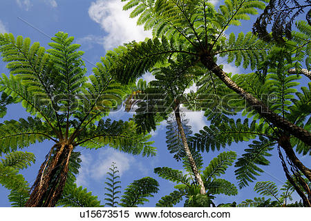 Stock Image of Subtropical plant u15673515.