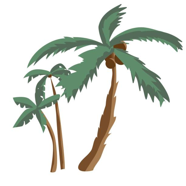 Subtropical Clip Art, Vector Images & Illustrations.