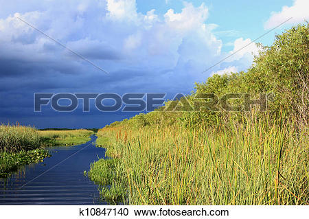 Stock Photography of Subtropical Everglades k10847140.