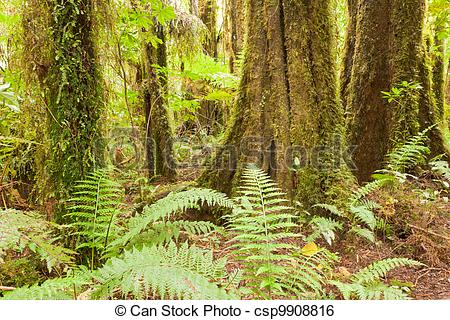 Stock Image of Lush ferns in sub.