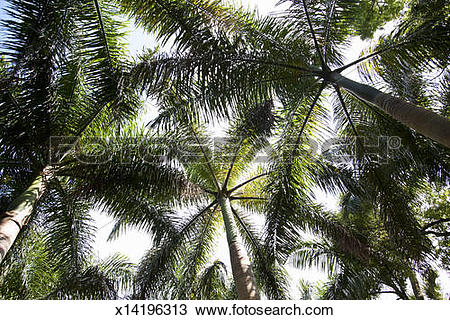 Stock Photo of Subtropical flowers and plants x14196313.