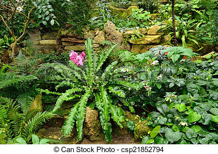 Stock Photographs of Subtropical plants in the greenhouse.